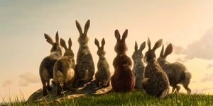 Watership Down BBC One