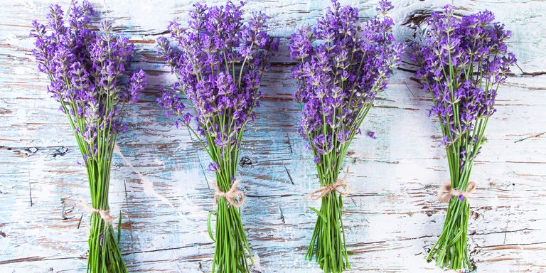 30 great lavender plant recipes and uses how to grow for Can you get purple roses