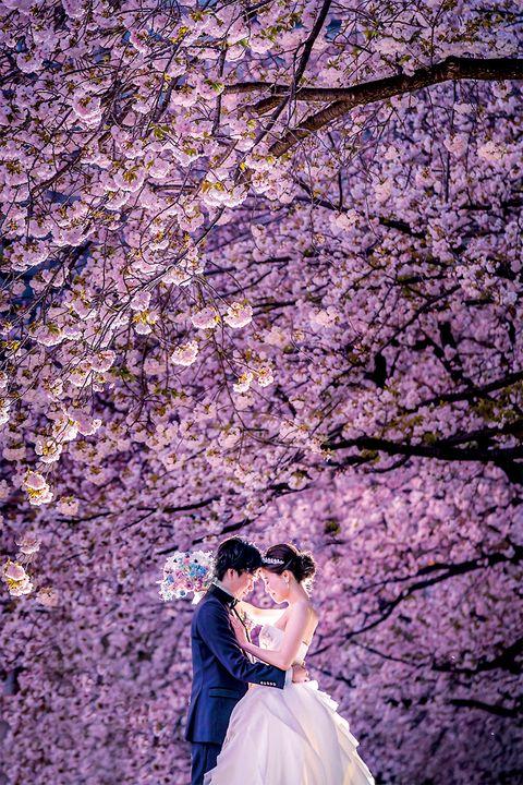 右近倫太郎さんによる桜の下でのショット