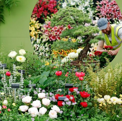 Flower Show 2020.Chelsea Flower Show Plant Of The Year 2020