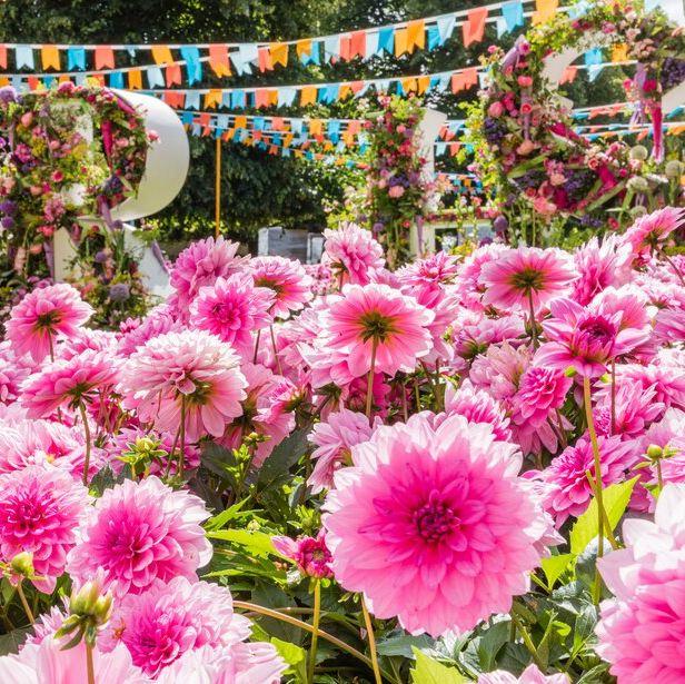 rhs hampton court flower show 2019