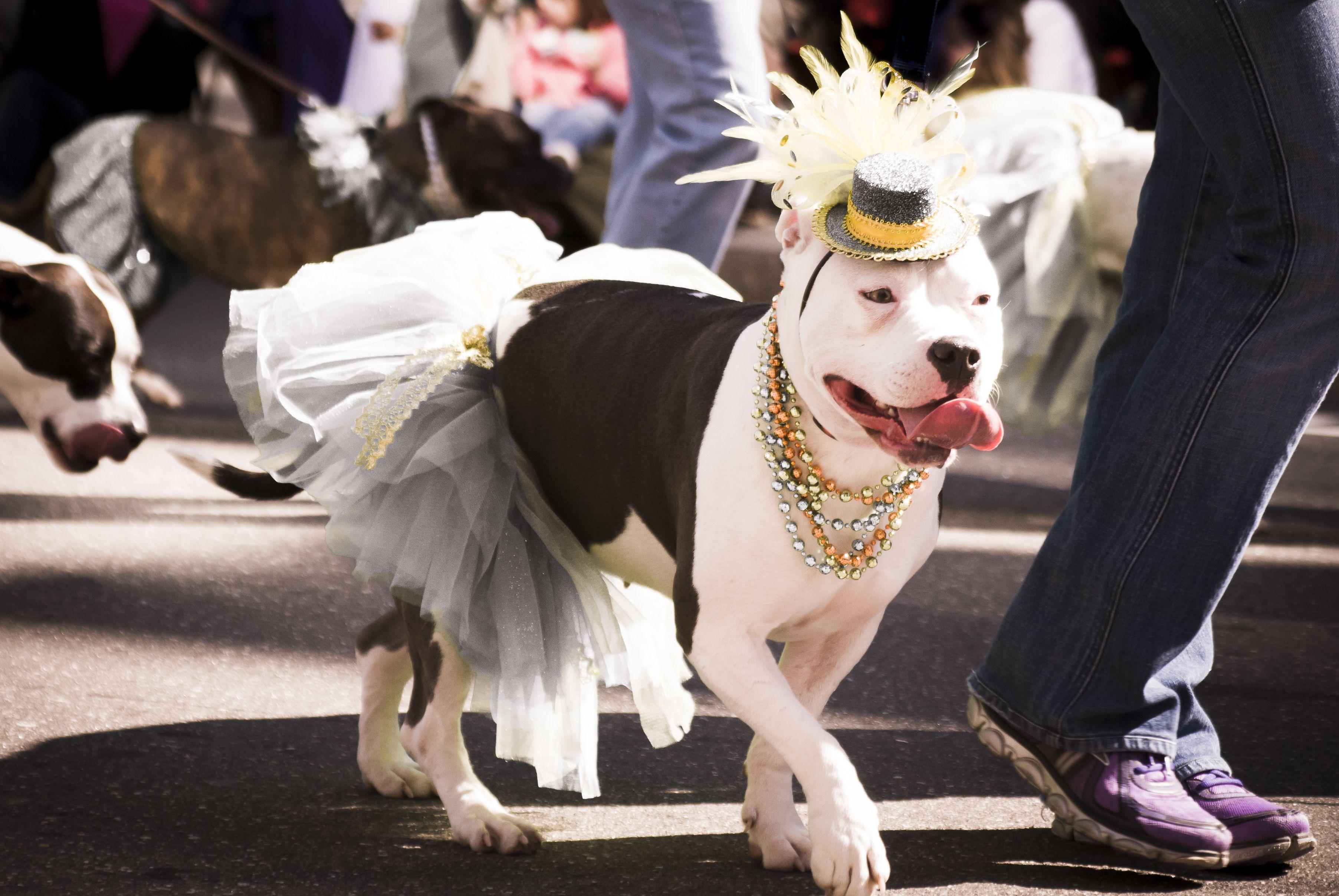 сватбен ден отиде при кучетата