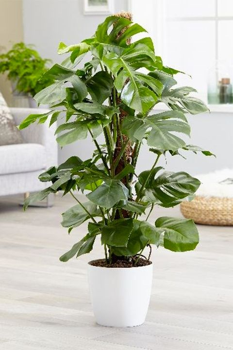 Wedding gift ideas - plants