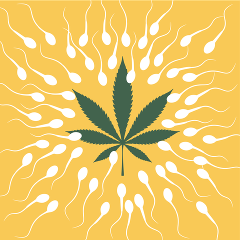 best service 9111d e5877 Does Weed Lower Sperm Count  - New Study Finds Marijuana Smokers ...