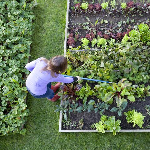 An Easy Guide to Start Composting At Home