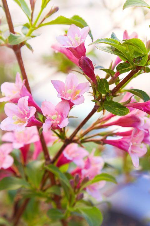 15 Best Spring Flowers