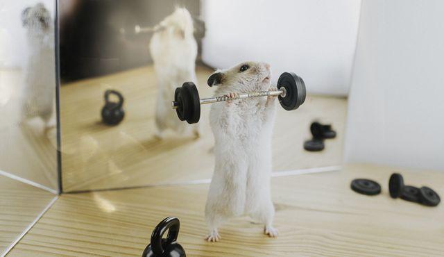 ratón haciendo pesas