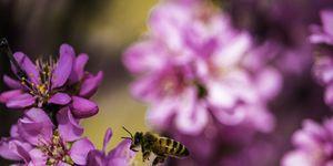 waarom-wesp-niet-doden