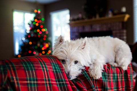 13 Christmas gift ideas for dogs