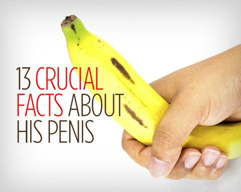 13 Crucial Facts About His Penis