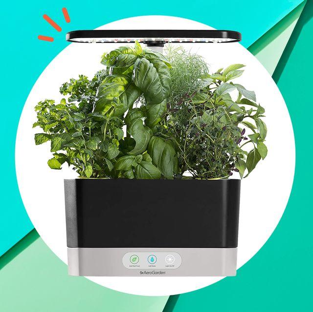 8 Best Indoor Hydroponic Garden Kits, Countertop Herb Garden