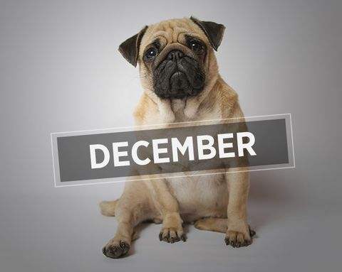 The Totally Disappointing Realities of December