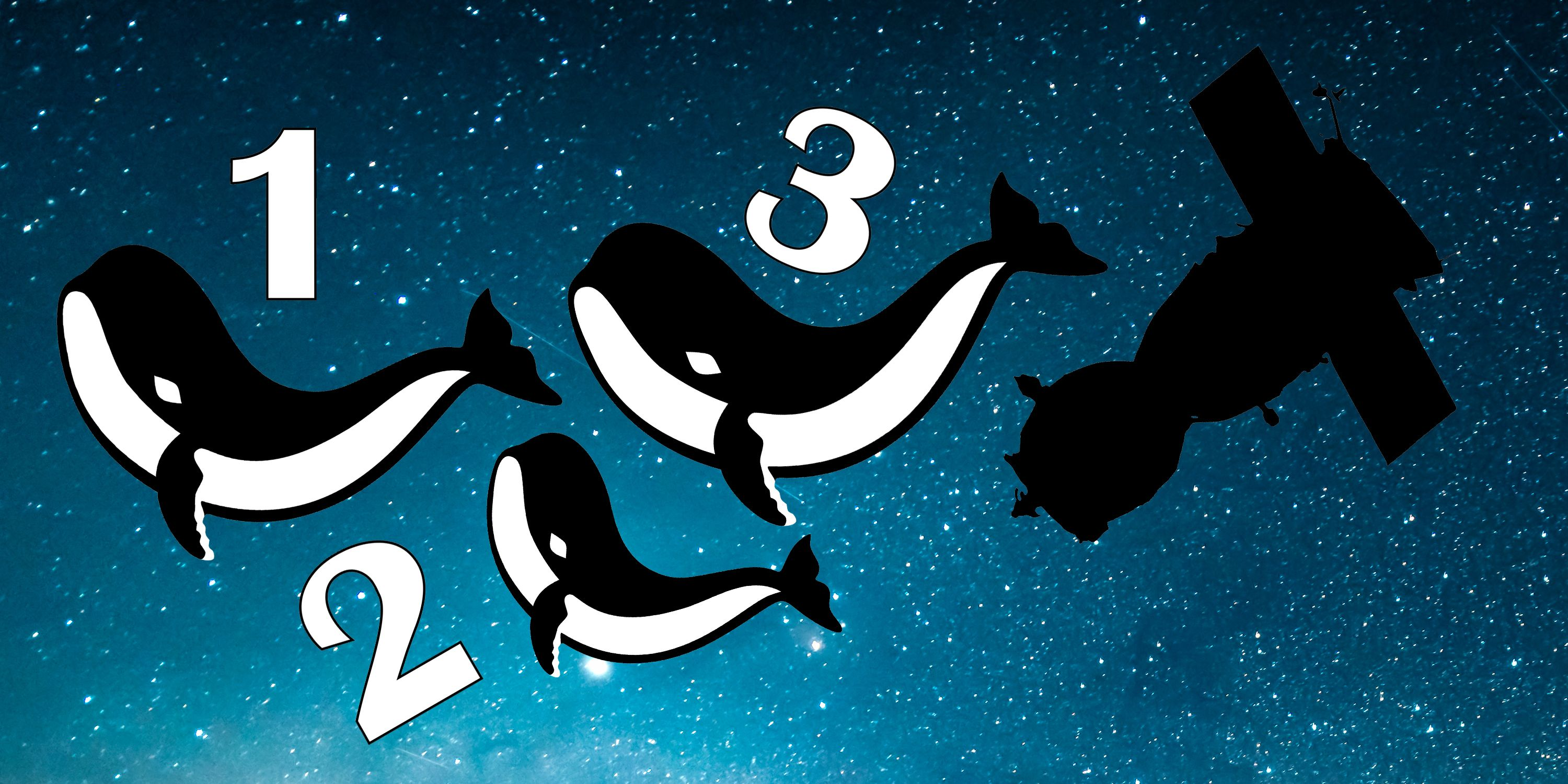 Why Scientists Are Counting Whales from Space