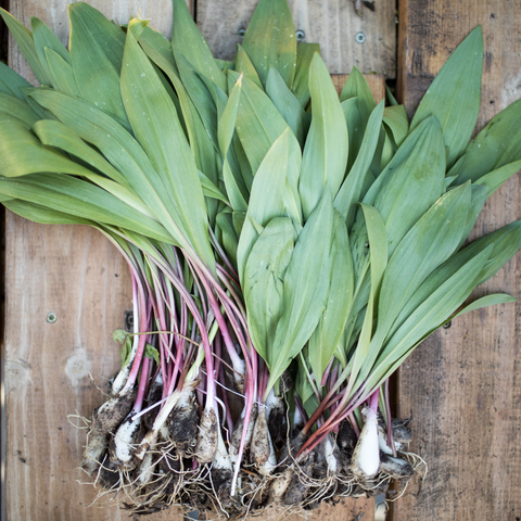 bunch of ramps with dirt on them