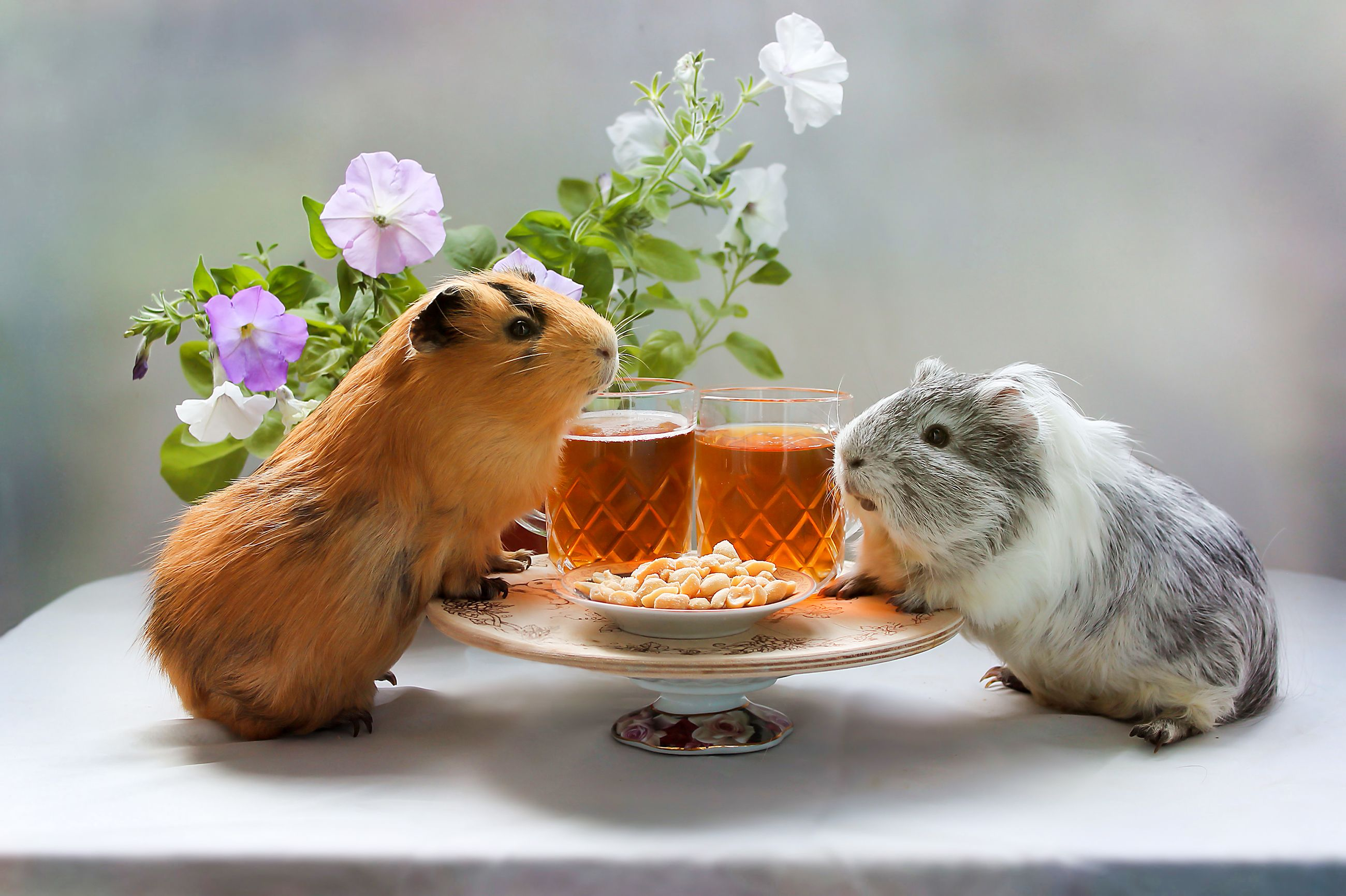 What Do What Do Guinea Pigs Eat? Here are 4 Must-Get Foods