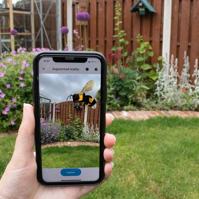 bumblebee conservation launches clever app