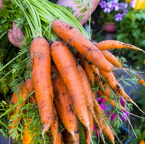 what to plant in august carrots