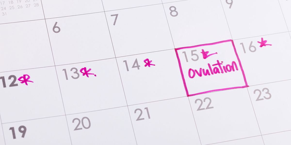 When Do Women Ovulate - What Is Ovulation-8884