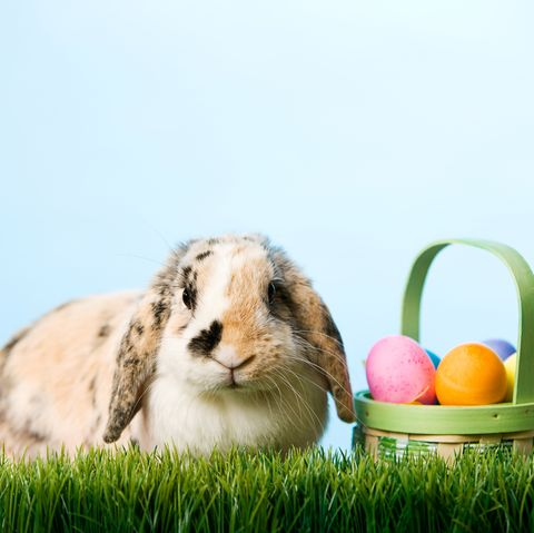 where does easter bunny live