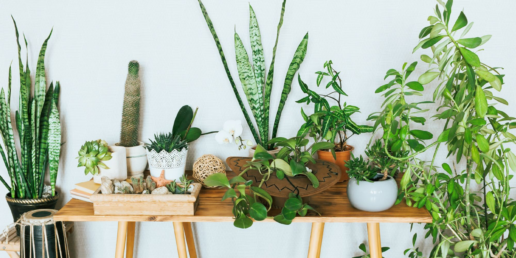This Is Where to Buy Plants Online to Deck Out Your Home With Gorgeous Greenery