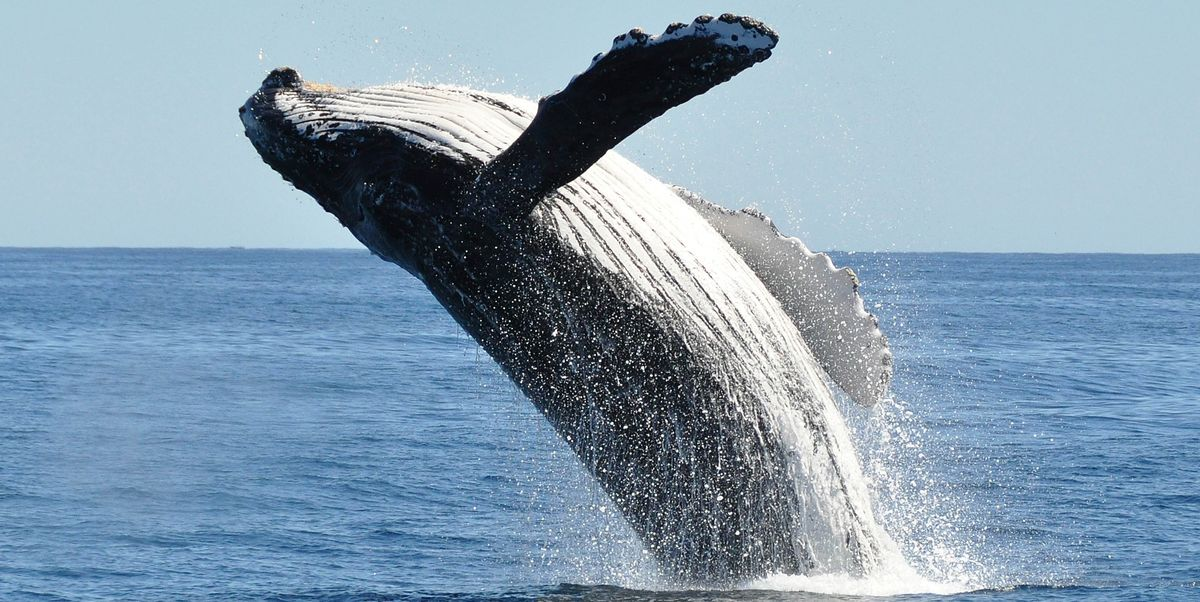 Best Places For Whale Watching When To Go Whale Watching