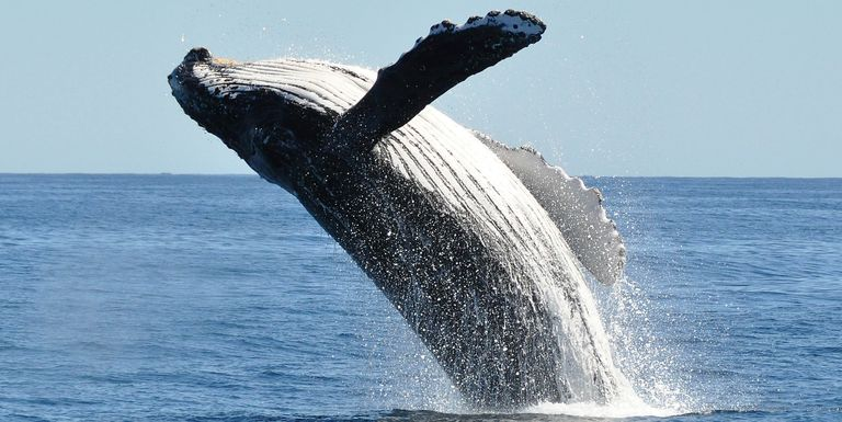 Where To Go Whale Watching Virginia