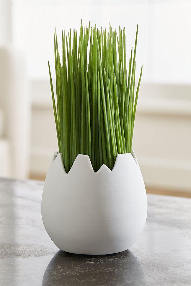 crate & barrel eggshell vase