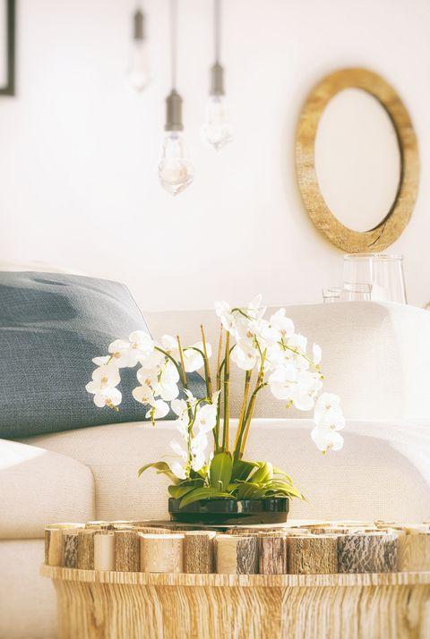 living room plants Phalenopsis