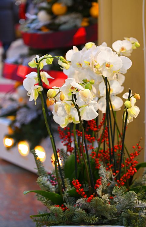 white orchid on background of christmas tree and lights