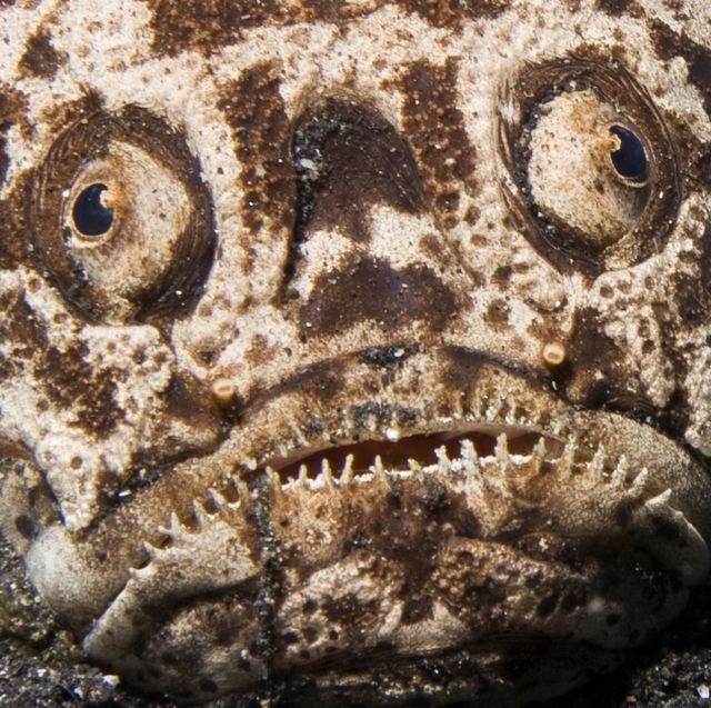 50 weirdest deep sea creatures