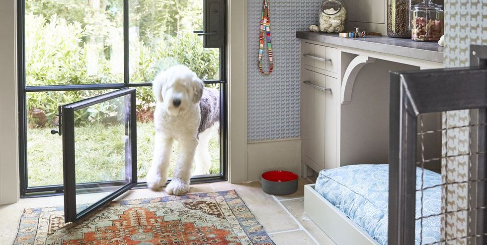 Every Pet Parent S Dream Home Needs A Doggy Room House
