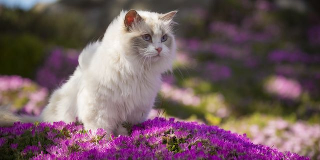 20 Reasons Why Cats Make The Best Pets Facts About Cats