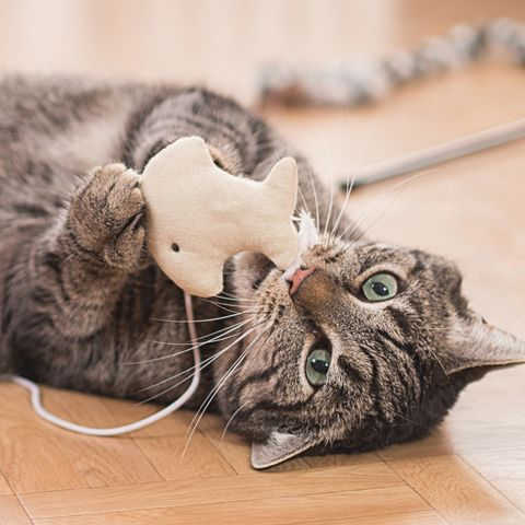 Why Cats Are Best Pets - Cost Less Than Dogs