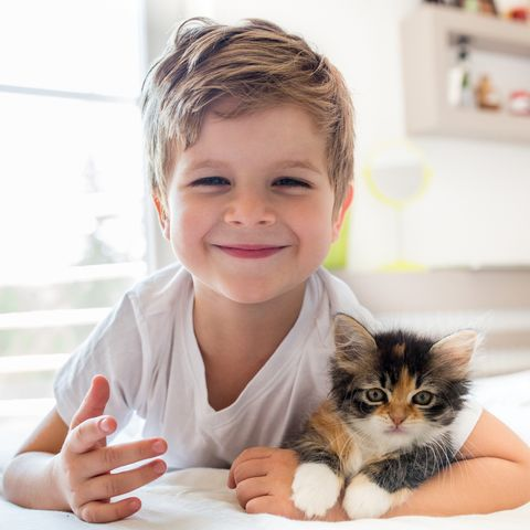 Why Cats Are Best Pets - Cats Are Good with Children