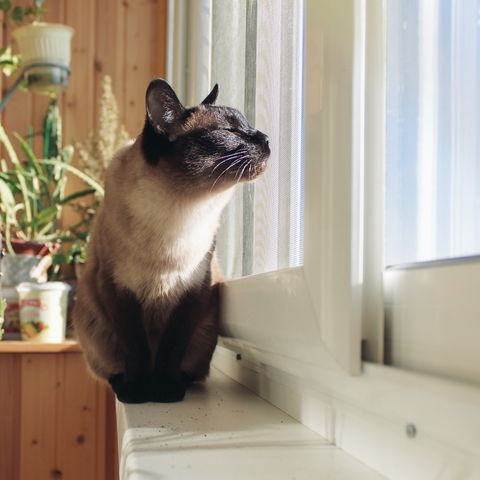Why Cats Are Best Pets - Ideal for Apartments