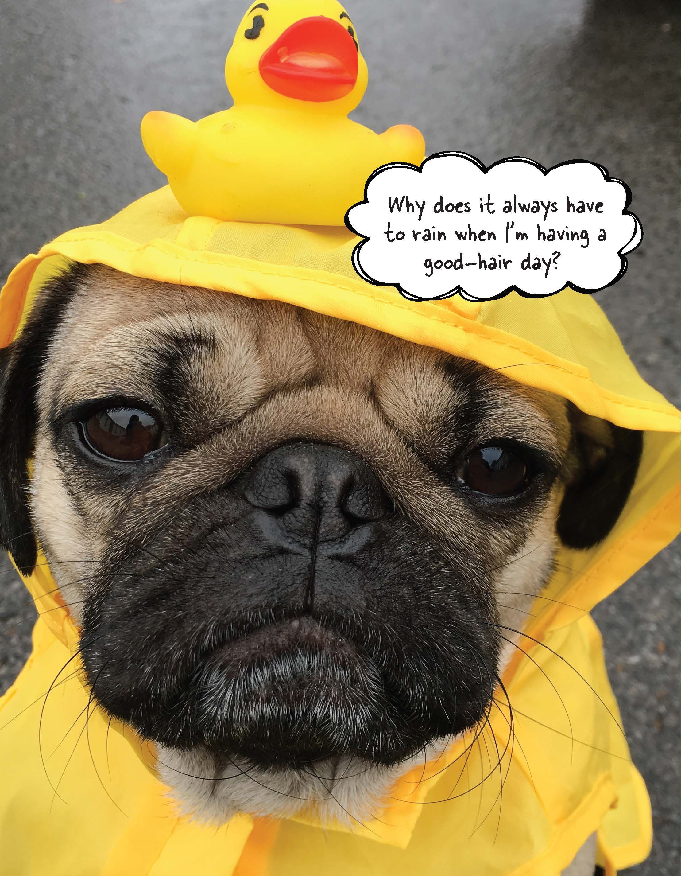 Simple Pug Army Adorable Dog - why-does-it-always-have-to-rain-1477685942  2018_100844  .jpg?crop\u003d1xw:1xh;center,top\u0026resize\u003d480:*