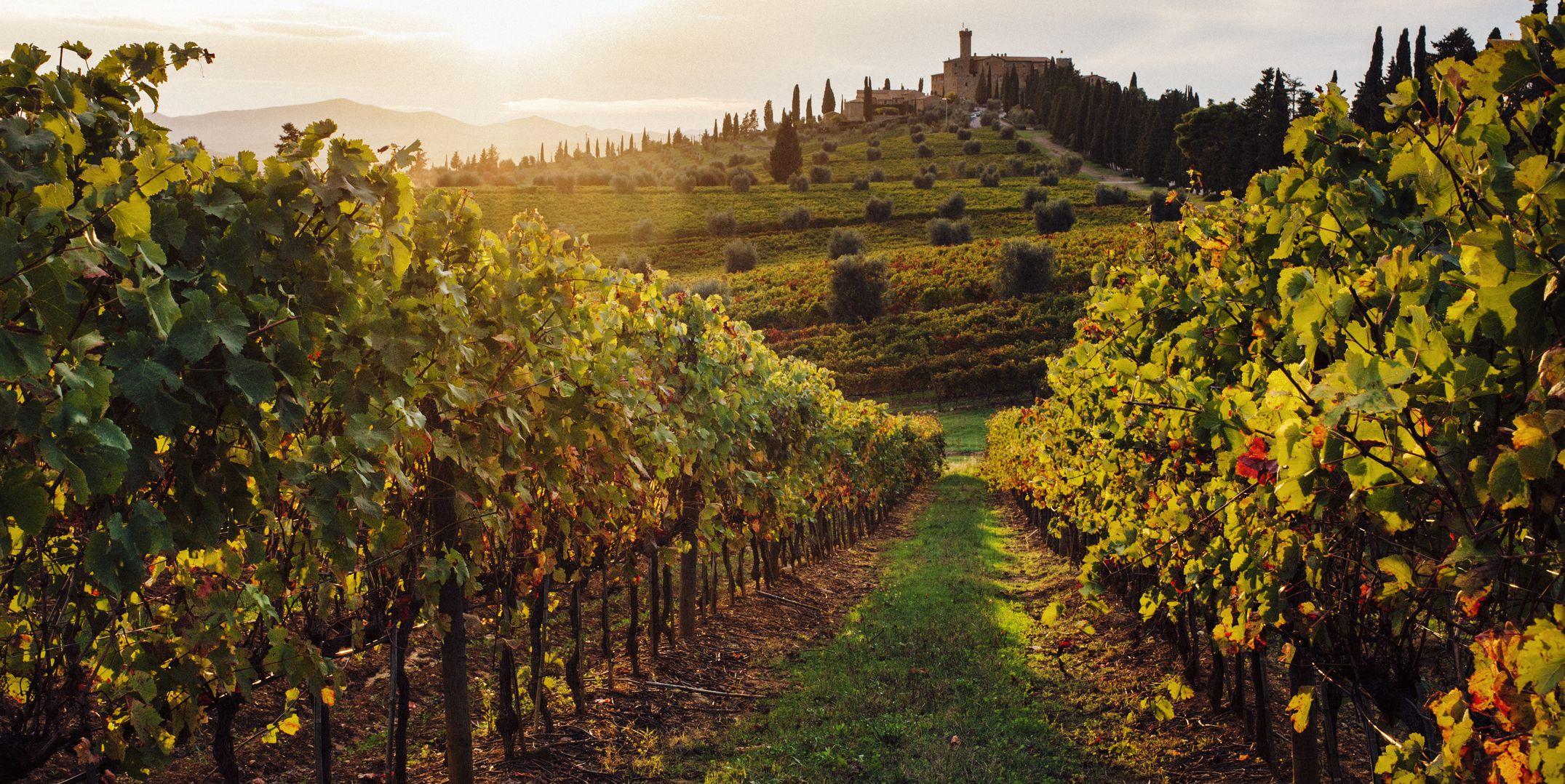 Duurzame wijngaard