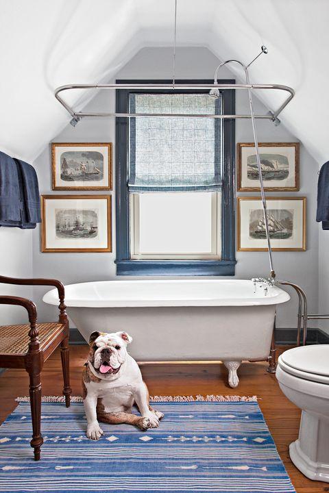 White, Room, Blue, Home, House, Interior design, Dog, Canidae, Furniture, Floor,