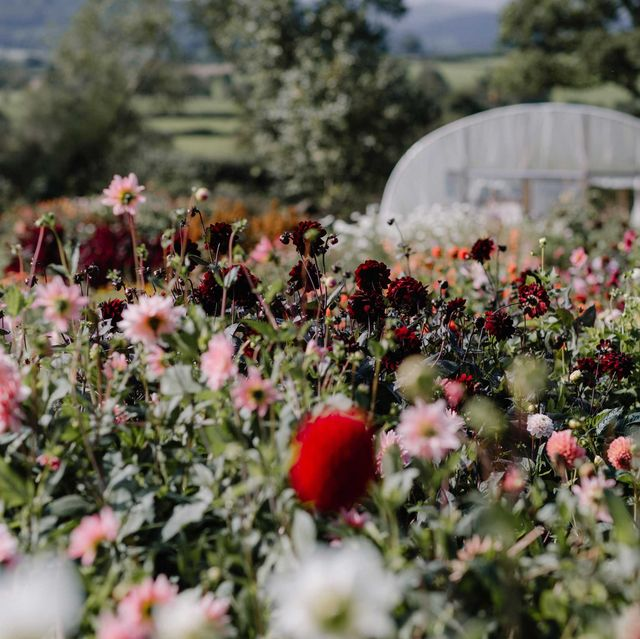 Flower, Plant, Spring, Flowering plant, Wildflower, Botany, Garden, Petal, Shrub, Annual plant,