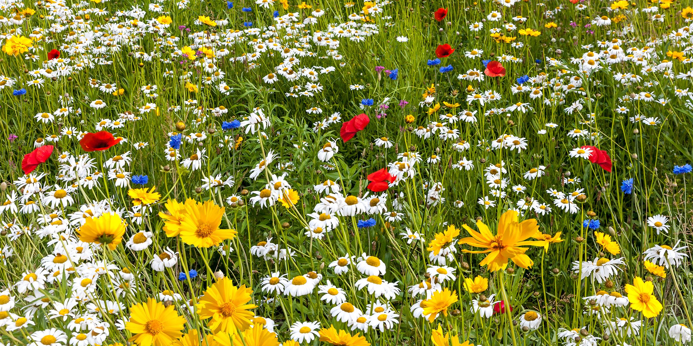 Outdoor Gardening Ideas Gardens garden ideas design and decor for outdoor living gardens outdoor living workwithnaturefo