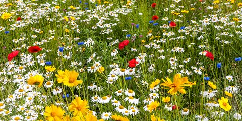 How Wildflowers Can Reduce Pesticide Use Wildflowers Pest Control