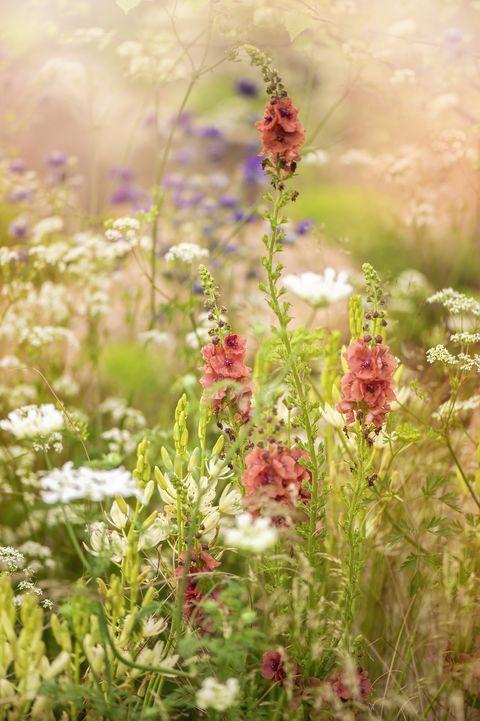 wildflowers growing
