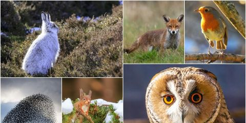 British wildlife winter photo