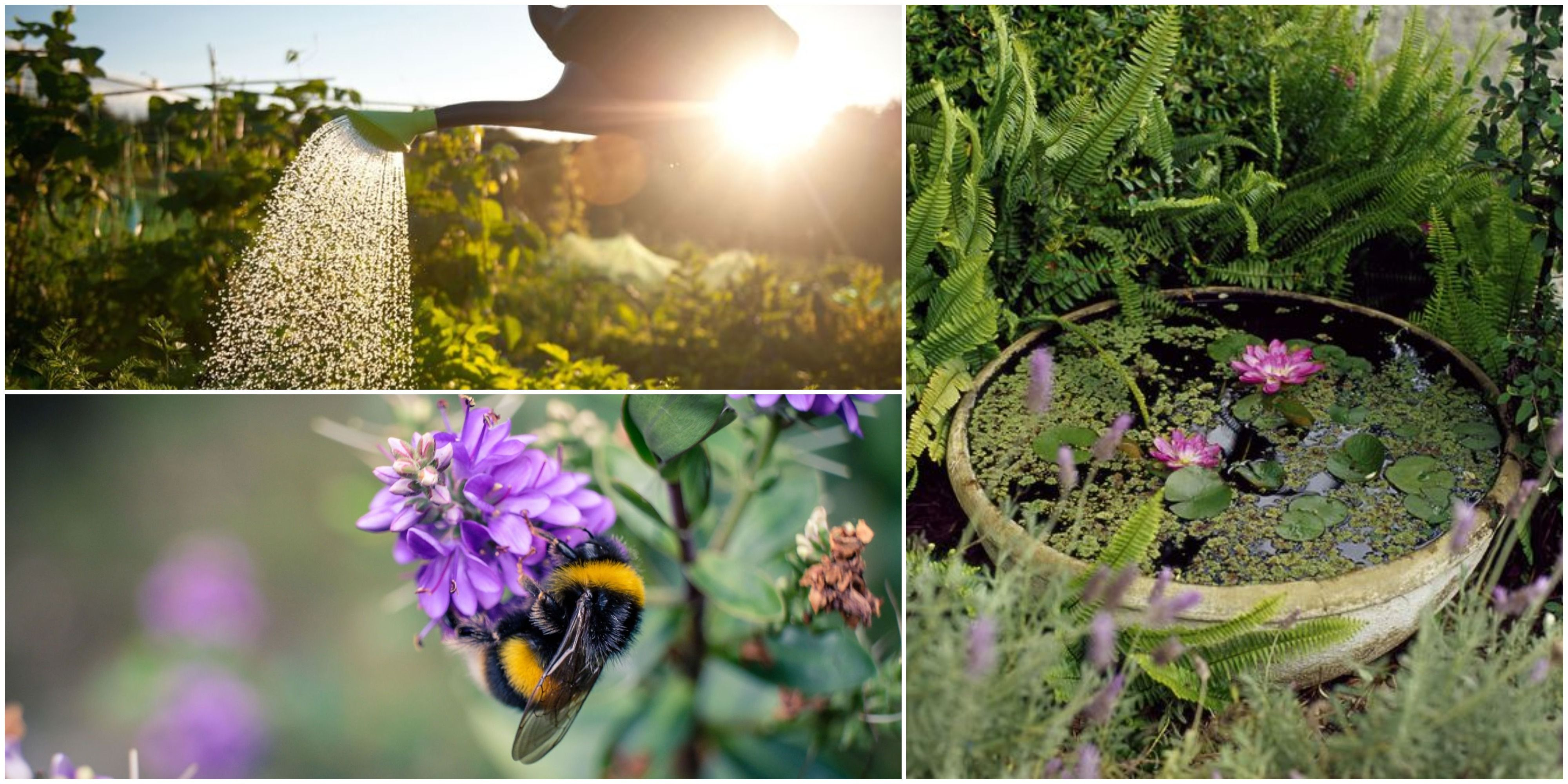 How To Care For Garden Wildlife During A Heatwave