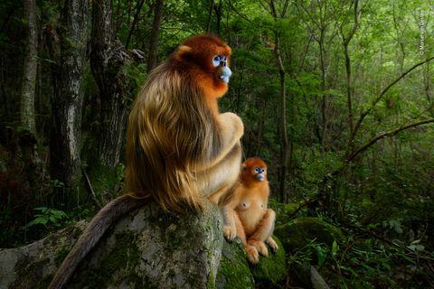 Wildlife Photographer of the Year madrid coam