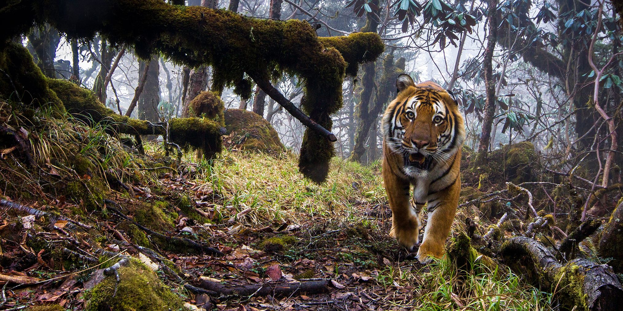 Wildlife Photographer of the Year Madrid