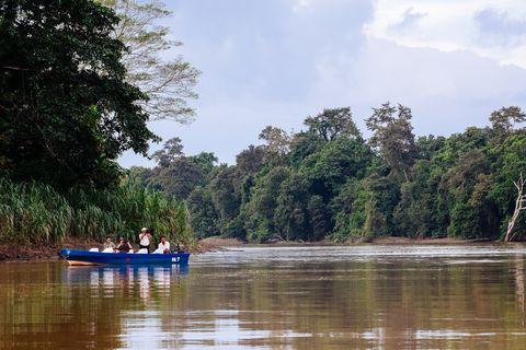 Borneo tours - Borneo orangutan tour