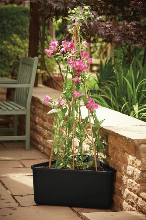 Wilko Triangular Cane Support Planter