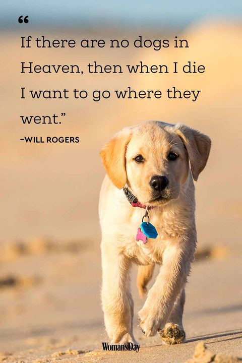 Funny Dog Quotes - 20 Cute Dog Sayings That Describe Your Pup