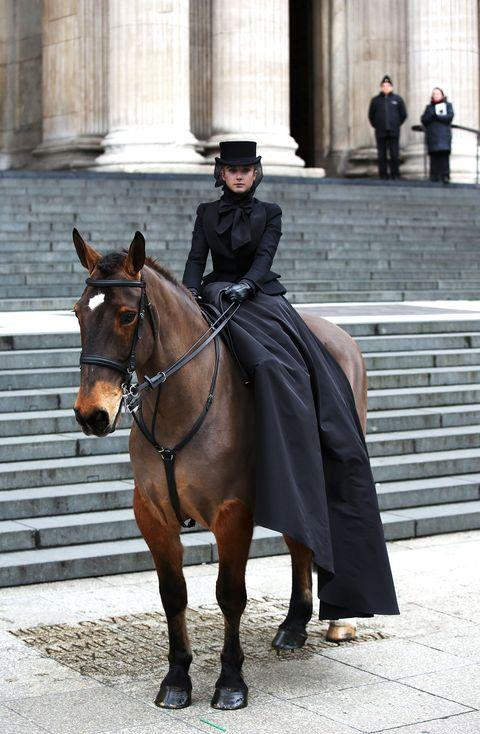 Horse, Bridle, Rein, Halter, Vertebrate, Mammal, Horse supplies, Horse tack, Equestrianism, Saddle,